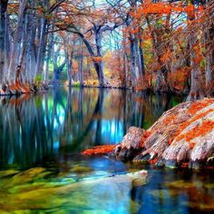 Nature's colors - Awesome Cypress Trees, Texas, USA