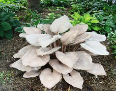 Cement Hosta plant... concrete leaves with a metal rod trhough the center and extende down for insertion into the ground. I might try this myself.