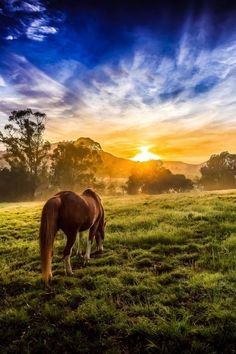 Grazing in the sunset animals sky sunset outdoors nature clouds trees country grass horse view