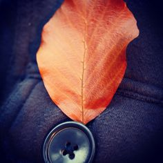 A leaf and a button