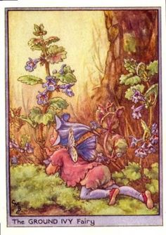 Ground Ivy Flower Fairy Print c.1950 Fairies by Cicely Mary Barker