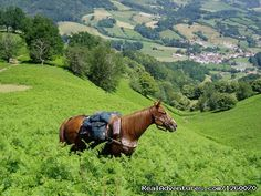 Enjoy the scenery on a horse riding tour and get back in touch with nature.