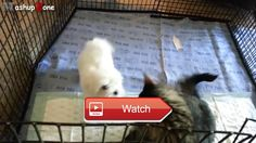 😸 Funny Cats Meeting Cute Puppies Compilation NEW 😼 😽 from Pet Lovers 😻