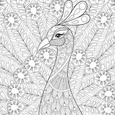 Vektor Peacock Adult Antistress Coloring Page Black And White