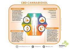 Therapeutic uses of cannabidiol and cannabis oil Cannabis Plant, Cannabis Oil, Healthy Mind And Body, Alzheimer, Epilepsy, Medical Marijuana, Getting To Know, Clinic, Oil Benefits