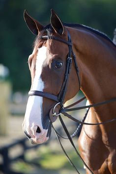 The new fashion for the hunter bridle. Wide, low padded nosebands.  Love!