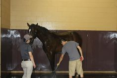 Bath time, after a long day of work preparing for  the Keeneland Sale. #keeneland