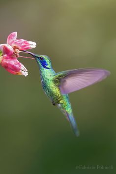 (via 500px / colibri , catarata del toro costa... - landscapes & nature