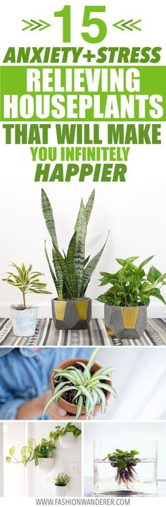 These anxiety and stress relieving houseplants are THE BEST home remedies! I'm so glad to find these indoor plants and home hacks and life hacks! From low maintenance air purifying plants to medicinal herb for home decor ideas! Apartment decorating and perfect for living room decor. #houseplants #homedecor #DIY #homehacks #mentalhealth #stressrelief #healthyliving