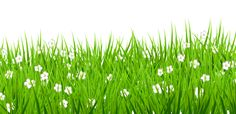 Transparent Grass with White Flowers Clipart
