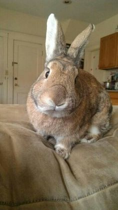 What a beautiful bunny.