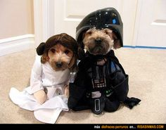 Disfraces perrunos: Star Wars.