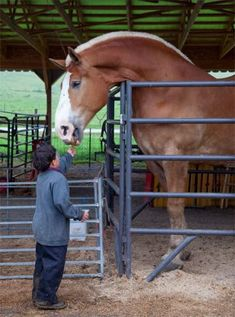 9 tips for keeping kids safe around horses --Kids love horses, but riding or being around them can be dangerous. Follow these tips from Farm Safety 4 Just Kids (fs4jk.org) to help keep everyone safe and happy. ---Lisa Foust Prater