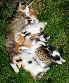 Relaxing on cat lady's front lawn ....
