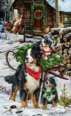 Bernese Mountain Dog Christmas Camp Christmas Cards - by Margaret Sweeney Christmas Scenes, Christmas Animals, Christmas Cats, Christmas Pictures, Christmas Holiday, Illustration Noel, Christmas Illustration, Bernese Mountain, Mountain Dogs