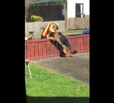 Um homem filmou o carteiro parando para brincar com seu cachorro todos os dias