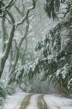 Highway 37 in snow, Castle Rock State Park, Santa Cruz Mountains, California…