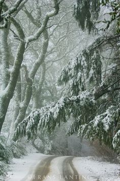 Highway 37 in snow, Castle Rock State Park, Santa Cruz Mountains, California, USA