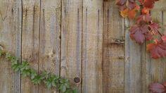 Reben, Herbst, Grußkarte, Holz Zaun