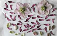 DIY fleurs et feuillages séchés sous verre Froken Overspringshandling via Nat et nature