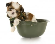 A photo of a Shih Tzu puppy wearing camouflage and sitting in a army helmet.