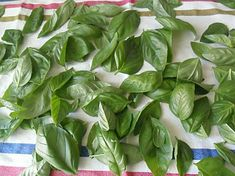 Come conservare il basilico Italian Cooking, Italian Recipes, Storing Basil, Aromatic Herbs, Diy Projects To Try, Food Design, Holidays And Events, Pesto, Food Storage
