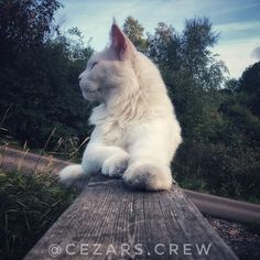 While I let my human slave go on a short vacation to Berlin Im holding up the fort in Gothenburg by myself Short Vacation, Gothenburg, Berlin, To Go, Let It Be, Cats, Travelling, Instagram, Animals