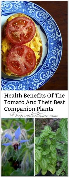 Tomatoes And Their Best Companion Plants, Some things are just meant to go together.