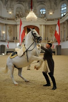 Check out performances of the Lipizzaner Horses of the Spanish Riding School at the majestic Imperial Palace in Vienna, Austria.we were there in the summer and all of the horses were on summer vacation at their farm! Spanish Riding School Vienna, Lipizzan, Austria Travel, Austria Tourism, Imperial Palace, Travel Magazines, White Horses, Horse Breeds, Munich