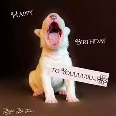 Bull Terrier Funny, Mini Bull Terriers, English Bull Terriers, Happy Birthday Pitbull, Happy Birthday Messages, Birthday Cards, Bully Dog, Best Dog Breeds, Animal Birthday