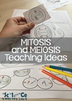 How I Teach Mitosis and Meiosis in High School Biology Wissenschaft mit Frau Lau hat tolle Ideen und Science Cells, Science Biology, Science Education, Life Science, Ap Biology, Physical Science, Biology Experiments, Earth Science, Forensic Science