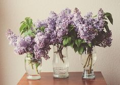 lilacs.. childhood memories..I'm 60 and my Mom still has her lilac bushes from when I was a kid, & she still cuts me bundles for my rooms , love u Mom