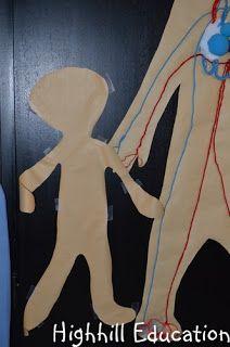 Highhill Homeschool: Human Body Unit - Week 19 - The Endocrine System