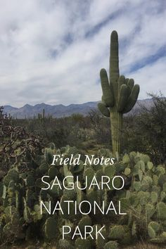 Check out my photos from Saguaro National Park - Tucson, AZ