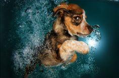 Photographer captures puppies underwater in adorable new series | Stylist Magazine