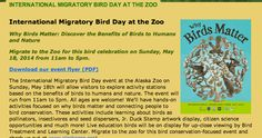 Evento de Día Internacional de las Aves Migratorias ¿Porque Important las Aves? celebración de aves migratorias en el zoológico de Alaska.  International Migratory Bird Day event Why Birds Matter? celebrating migratory birds at the Alaska Zoo. #BirdDay