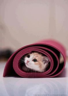 How to Do Yoga With Your Cat Yoga mats draw cats like moths to flame, but there are ways you can still get your yoga in. Learn the safe way to do yoga with your cat. Cute Kittens, Cats And Kittens, Crazy Cat Lady, Crazy Cats, Yoga Gato, Baby Animals, Cute Animals, Animals Images, Amor Animal