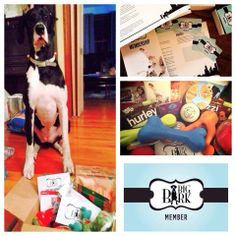 Big Bark Members get 4 seasonal Member Boxes delivered to your door. Includes high quality toys, treats and coupons- all Big Dog approved. www.bigbarkonline.com/join-us/