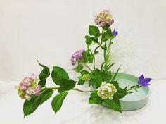 #小原流いけばな #紫陽花 #傾斜盛り花 #夏