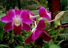 Google Image Result for http://www.flowers-cs.com/Pictures/ORCHID.jpg