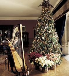 Biltmore estate Christmas tree - It really is gorgeous!