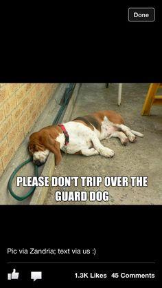 Attention, chien de garde !
