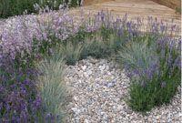 Schöne Kombination: Kies und blühender Lavendel