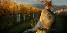 Seresin's Fourth Estate Marlborough New Zealand, Lush Beauty, Wineries, Vineyard, Mood, Videos, Wine Cellars, Vineyard Vines