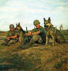 Two scout dog handlers and their dogs of the 49th Scout Dog Platoon rest during Operation Fairfax. (1967)
