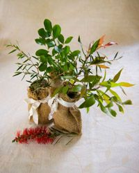 Native seedling wedding favour