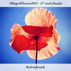 #BlugirlFlowers2013 Instagram Photo Contest finalist @silviahiroshi