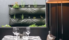 Aromatic Herbs Garden - Cafeína Restaurant Noocity Urban Ecology
