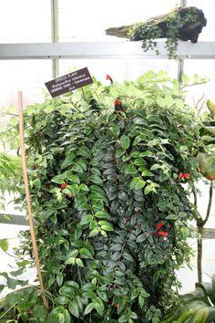 Quelles plantes d'intérieur retombantes choisir ?