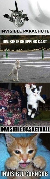 #lolcats Best funny lolcat pics with joke caption. For more hilarious pics and funny jokes visit my cute board ;)